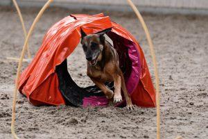 Hond in tunnel Hooperen.nl